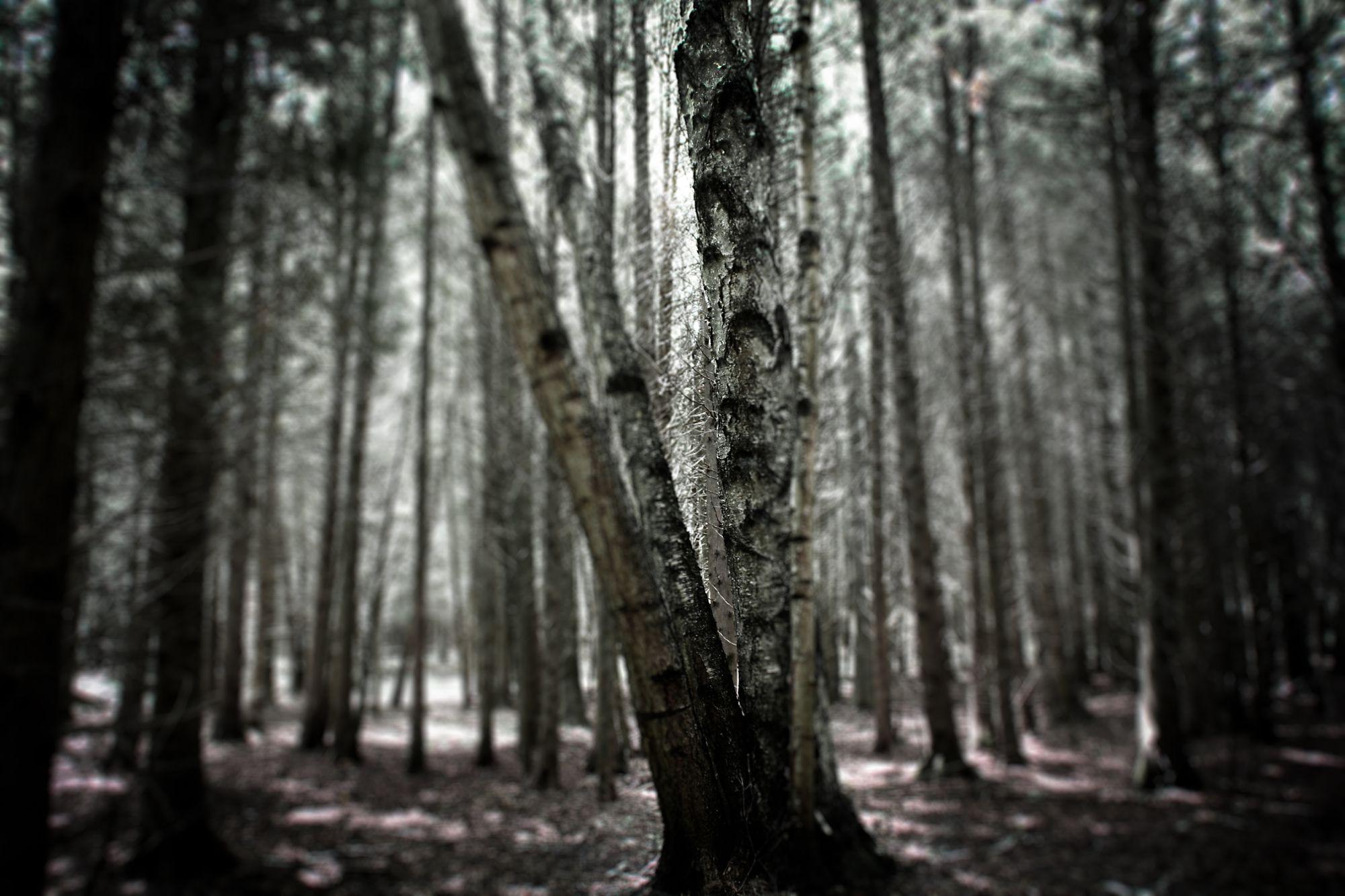 Biking Tree Trails