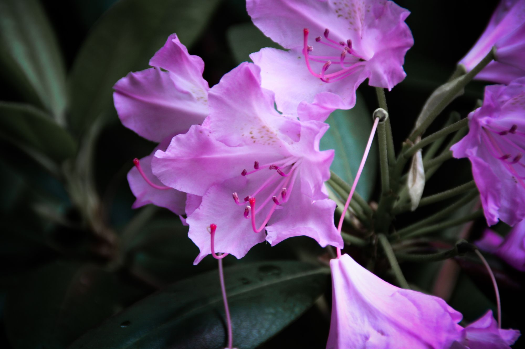 01) Flowers