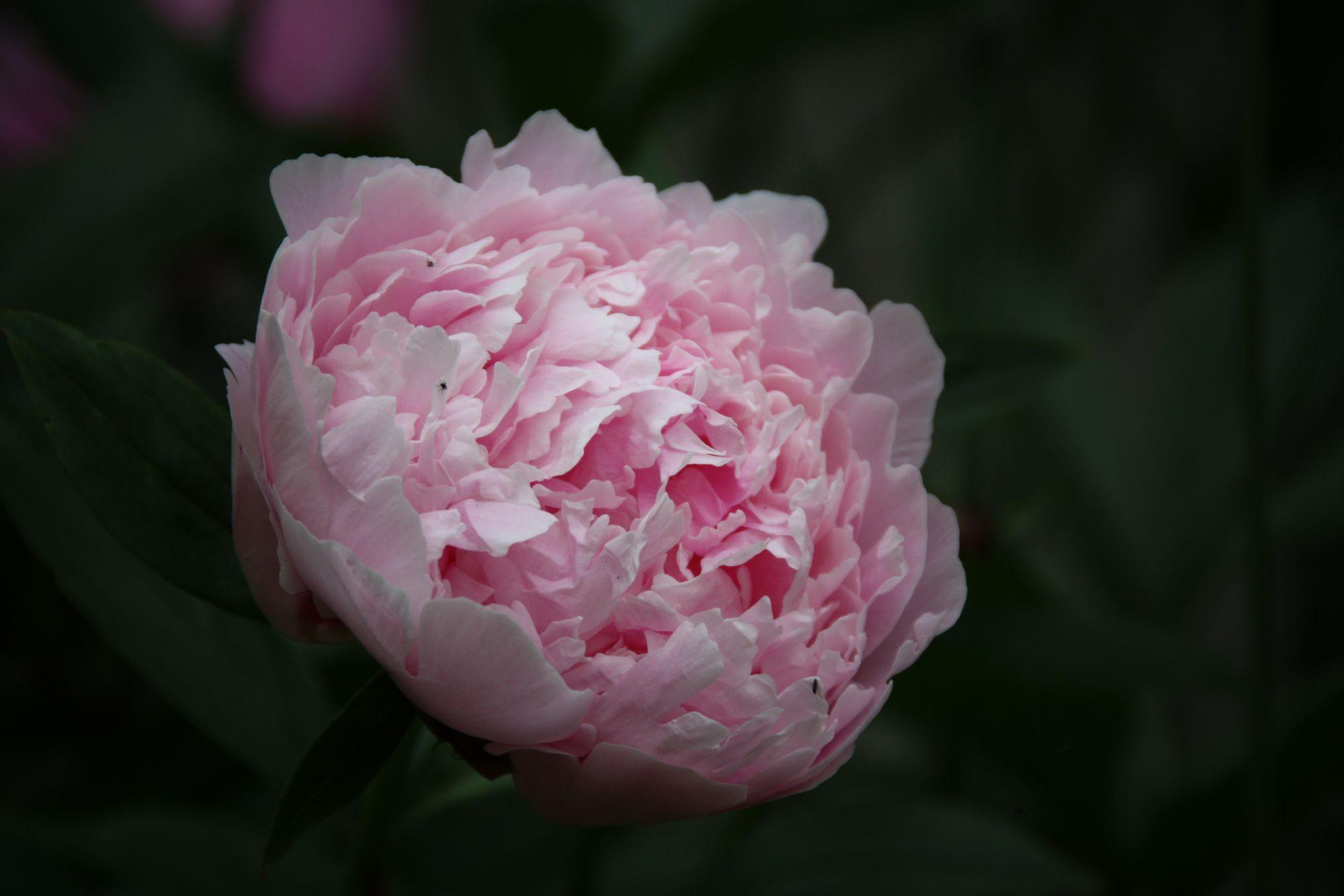 05) Flowers