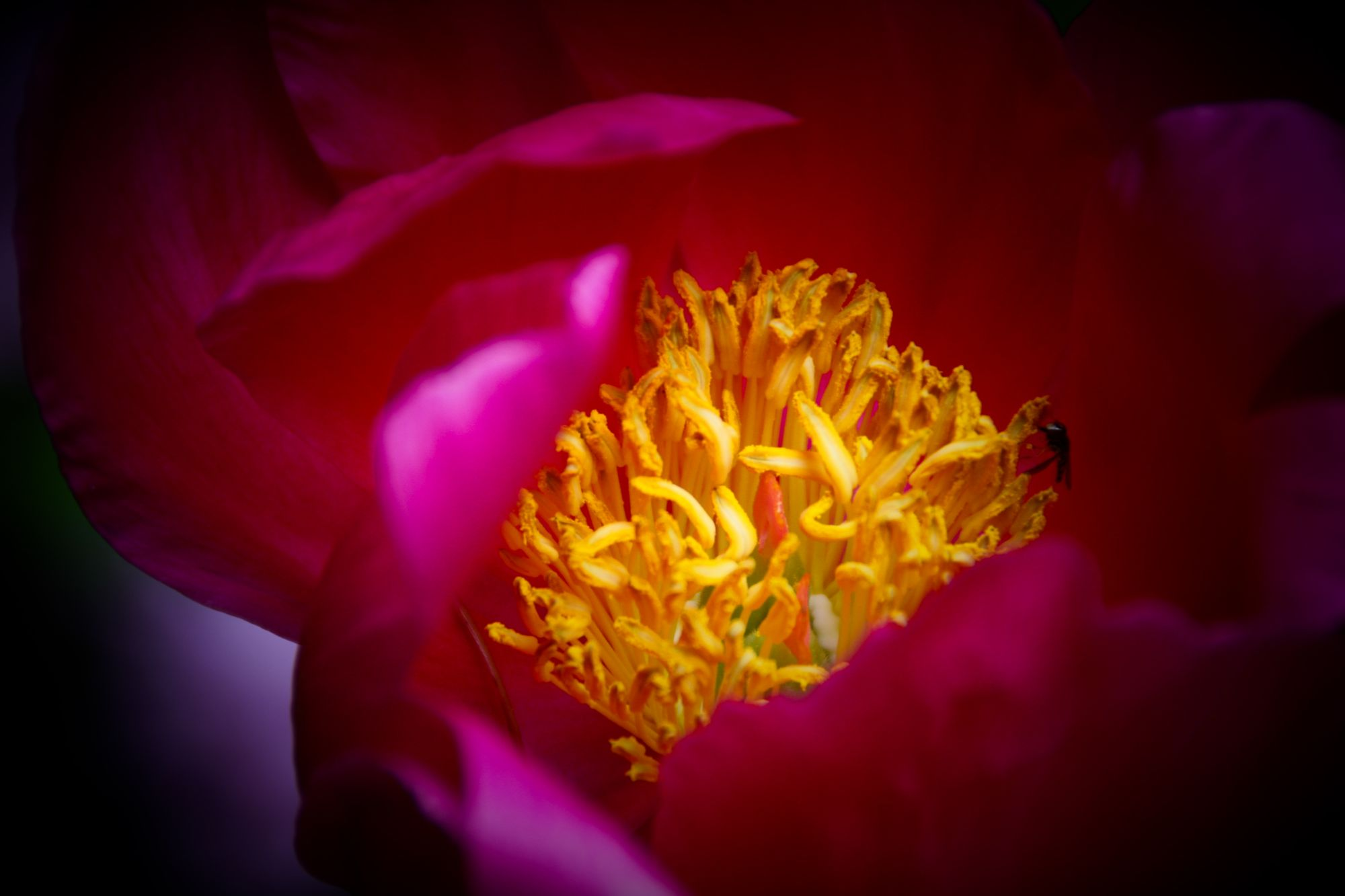 07) Flowers