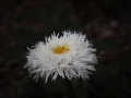 03) Flowers