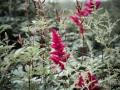 04) Flowers