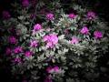 06) Flowers