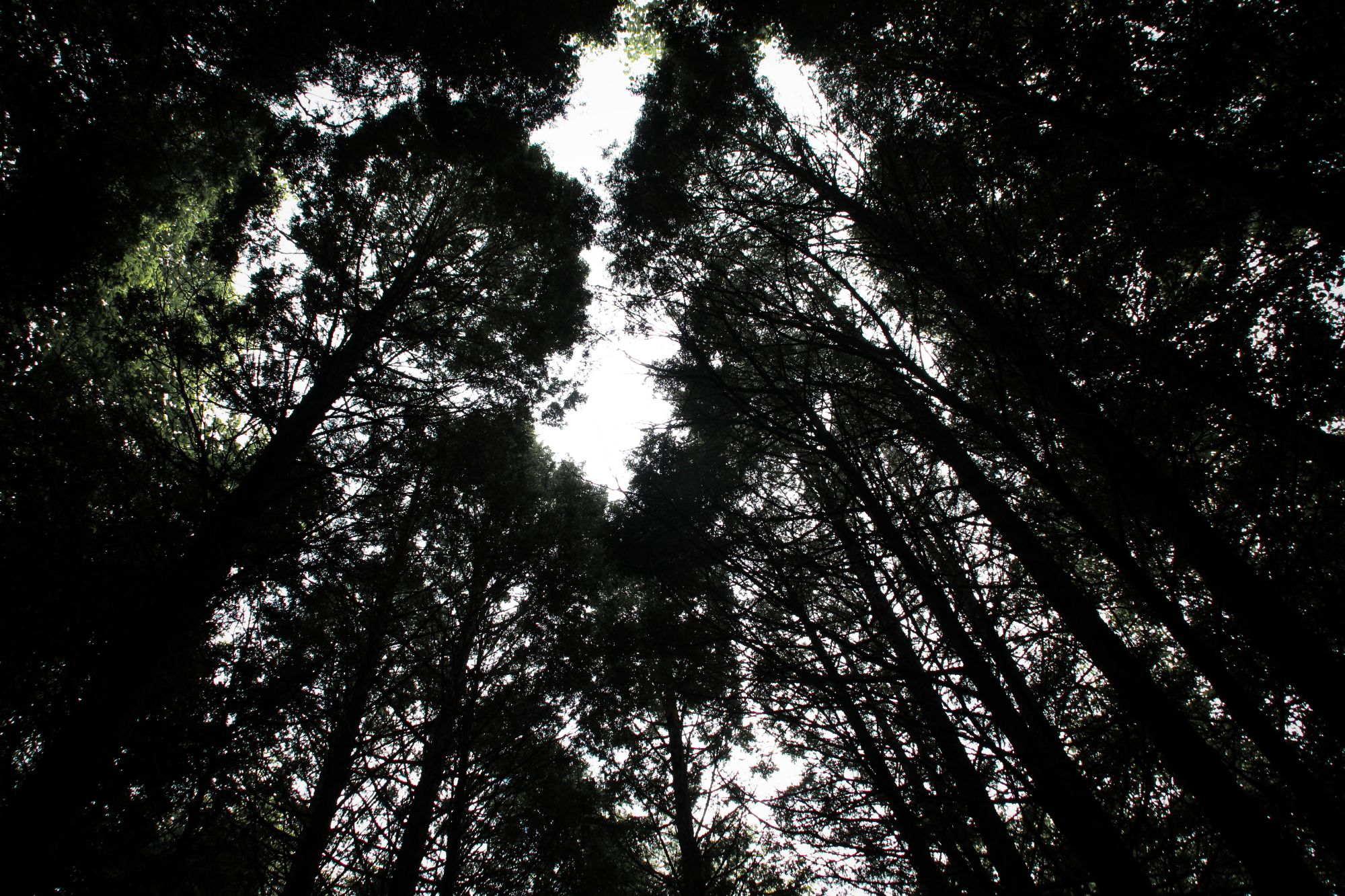 03 Nature Trails Tall Trees