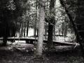 01 Nature Trails Bridges