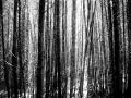 05 Nature Trails Cedder Trees