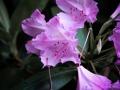 Oostburg Flowers
