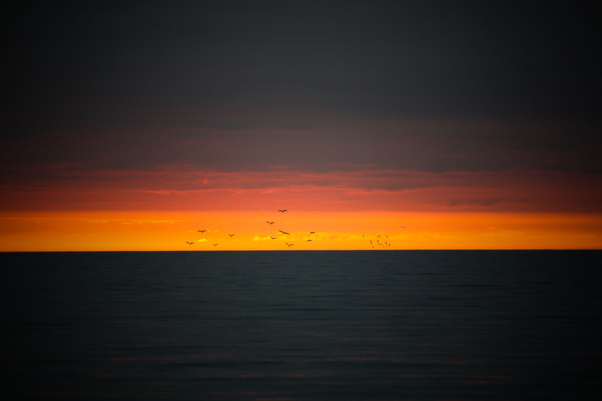 Beach Sunrise & birds