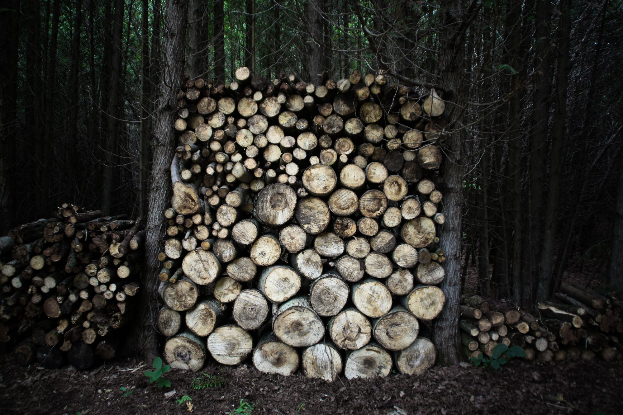 Stable Logs